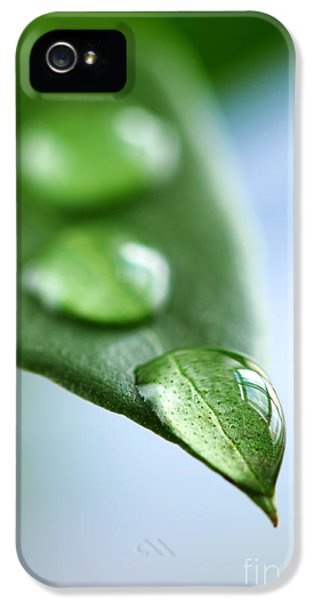 Green Leaf With Water Drops IPhone 5 Case by Elena Elisseeva