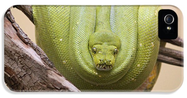 Green Tree Python IPhone 5 Case by Suzanne Gaff