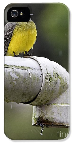 Grey-capped Flycatcher IPhone 5 Case