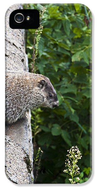 Groundhog Day IPhone 5 / 5s Case by Bill Cannon