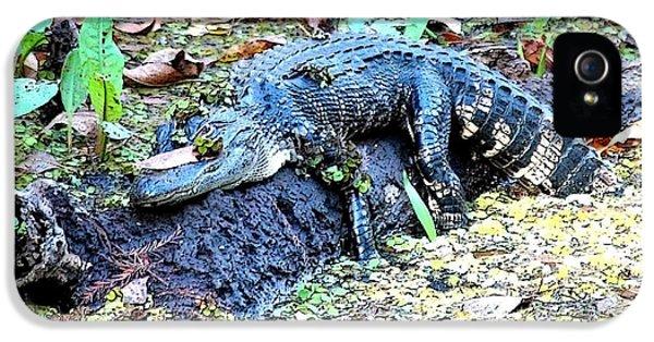 Hard Day In The Swamp - Digital Art IPhone 5 Case by Carol Groenen