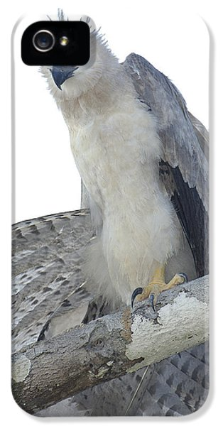 Harpy Eagle iPhone 5 Case - Harpy Eagle Harpia Harpyja Recently by Pete Oxford