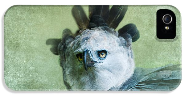 Harpy Eagle Portrait IPhone 5 Case by Betty LaRue