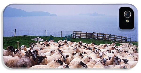 Sheep iPhone 5 Case - Herding Sheep, Inishtooskert, Blasket by The Irish Image Collection