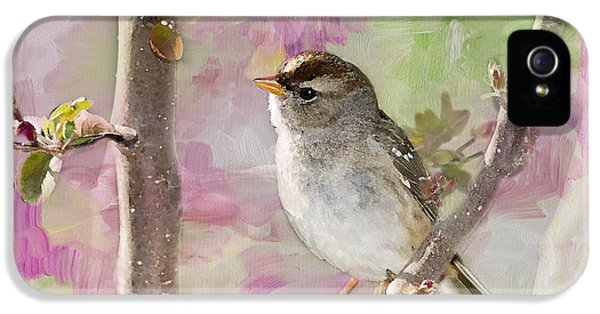 House Sparrow IPhone 5 Case by Betty LaRue