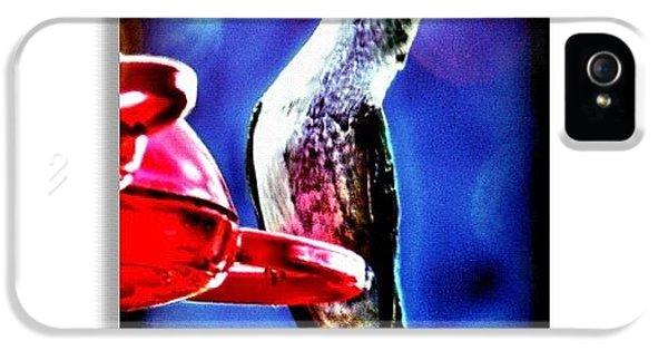 Edit iPhone 5 Case - Hummingbird by Mari Posa