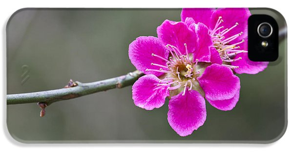 IPhone 5 Case featuring the photograph Japanese Flowering Apricot. by Clare Bambers