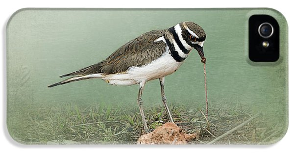 Killdeer iPhone 5 Case - Killdeer And Worm by Betty LaRue