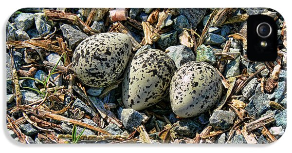 Killdeer Bird Eggs IPhone 5 Case by Jennie Marie Schell