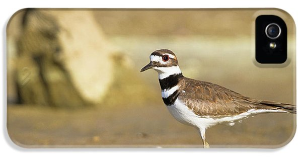 Killdeer iPhone 5 Case - Killdeer On The Shore by Steven Llorca