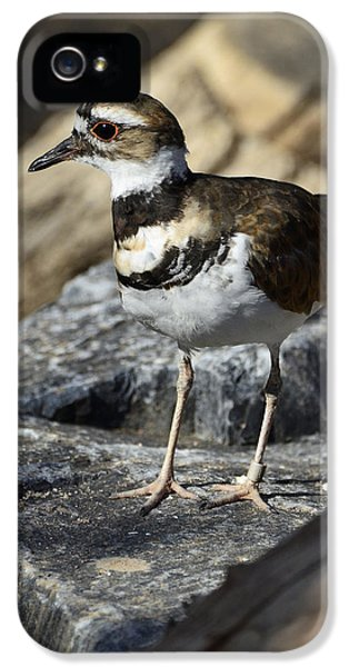Killdeer iPhone 5 Case - Killdeer by Saija  Lehtonen