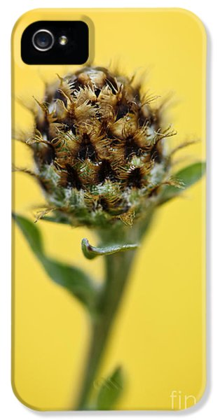 Knapweed Plant IPhone 5 Case