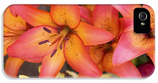 Lilies Background IPhone 5 Case by Jane Rix