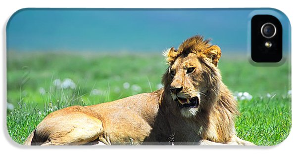 Lion King IPhone 5 Case by Sebastian Musial