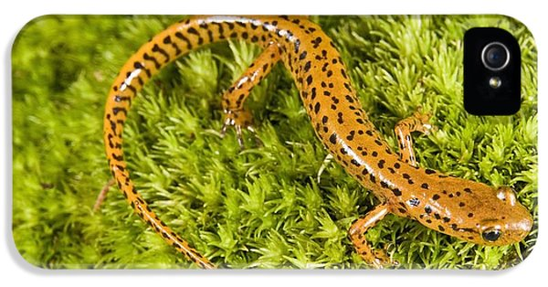 Longtail Salamander Eurycea Longicauda IPhone 5 / 5s Case by Jack Goldfarb