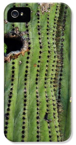 Lovebirds And The Saguaro  IPhone 5 / 5s Case by Saija  Lehtonen
