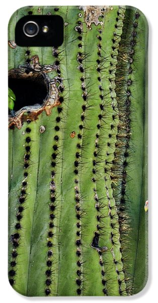 Lovebirds And The Saguaro  IPhone 5 Case