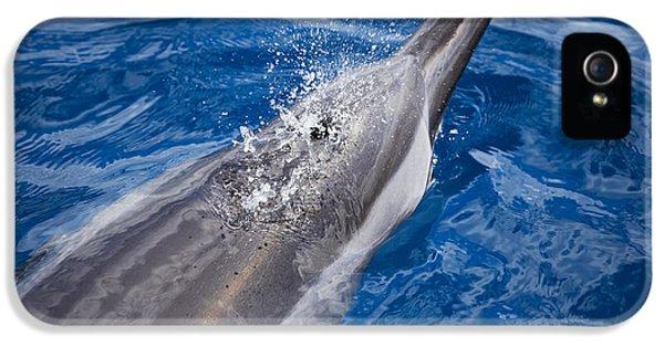 Breathe iPhone 5 Case - Maui Dolphin by Dave Fleetham