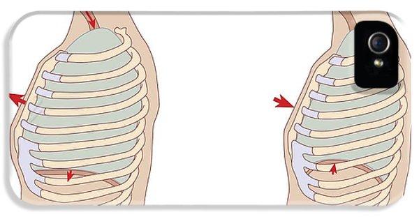 Breathe iPhone 5 Case - Mechanics Of Respiration, Diagram by Peter Gardiner