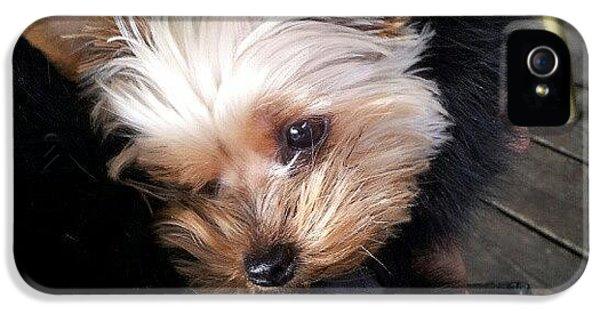 My #princess #dog #yorkie IPhone 5 Case