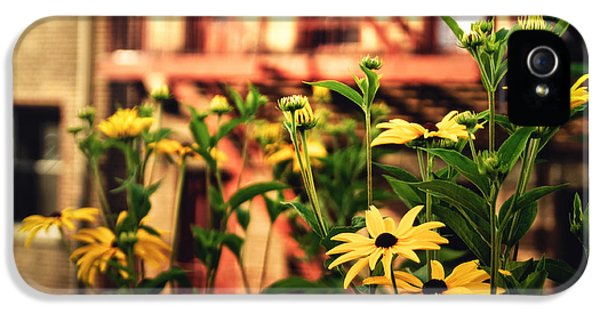 New York City Flowers Along The High Line Park IPhone 5 Case by Vivienne Gucwa