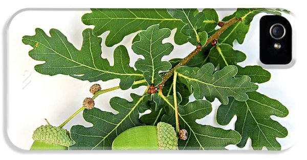 Oak Branch With Acorns IPhone 5 Case by Elena Elisseeva