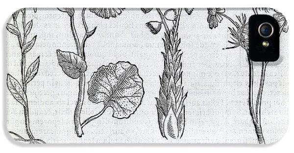 Ocular Plants, 16th Century Artwork IPhone 5 Case