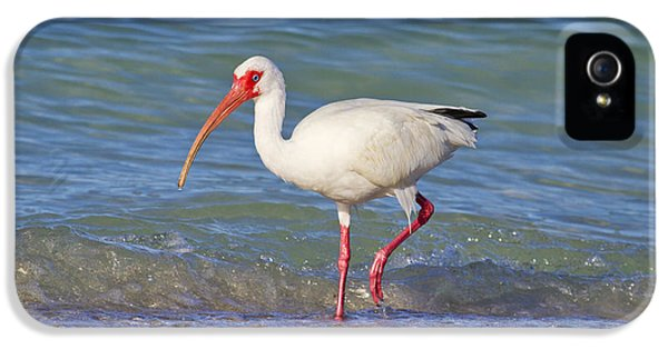 Ibis iPhone 5 Case - One Step At A Time by Betsy Knapp