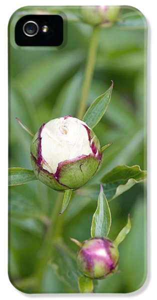 Paeonia Lactiflora 'shirley Temple' IPhone 5 Case by Jon Stokes