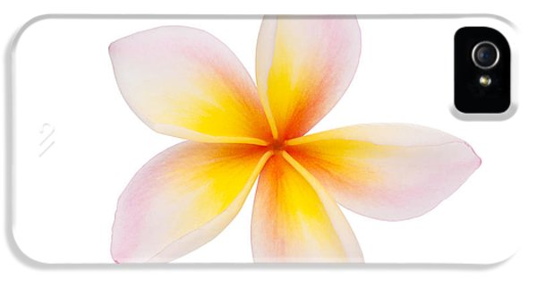 Plumeria Or Leelawadee IPhone 5 Case by Atiketta Sangasaeng
