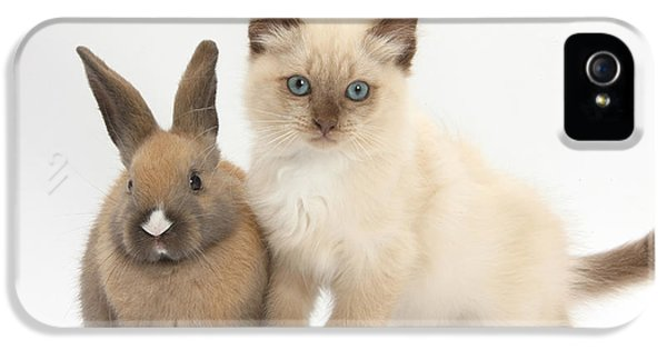Ragdoll-cross Kitten And Young Rabbit IPhone 5 Case