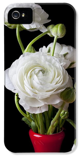 Ranunculus In Red Vase IPhone 5 Case by Garry Gay
