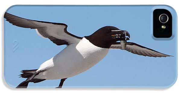 Razorbill In Flight IPhone 5 Case by Bruce J Robinson