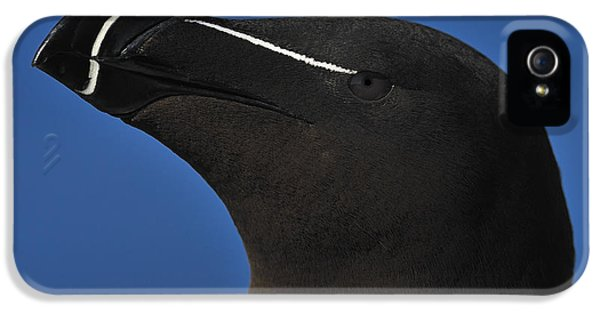 Razorbill Portrait IPhone 5 Case by Tony Beck