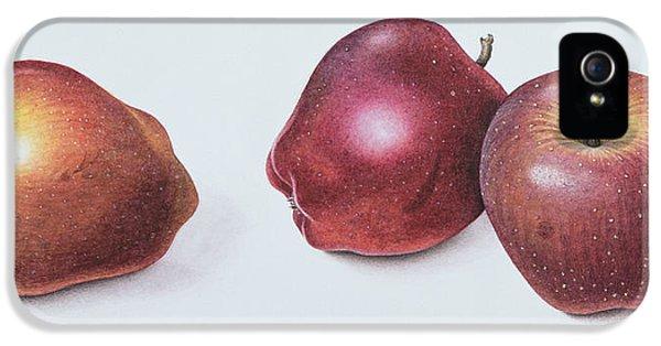 Red Apples IPhone 5 Case by Margaret Ann Eden