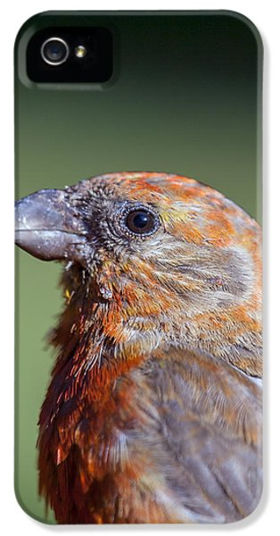 Red Crossbill IPhone 5 Case by Derek Holzapfel