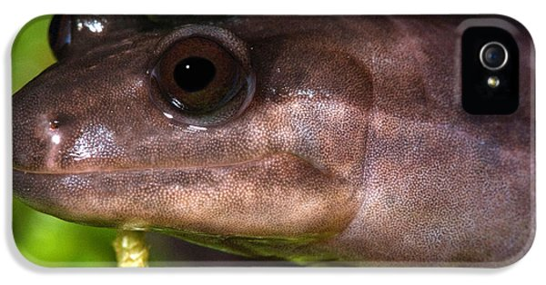 Red Hills Salamander IPhone 5 / 5s Case by Dant� Fenolio