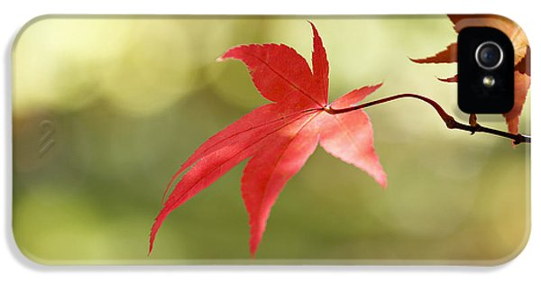 IPhone 5 Case featuring the photograph Red Leaf. by Clare Bambers