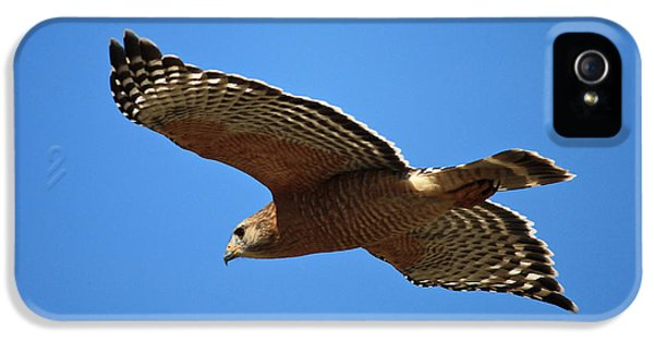 Red Shouldered Hawk In Flight IPhone 5 Case