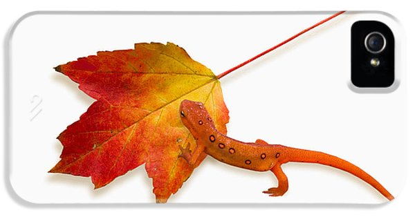 Red Spotted Newt IPhone 5 Case by Ron Jones