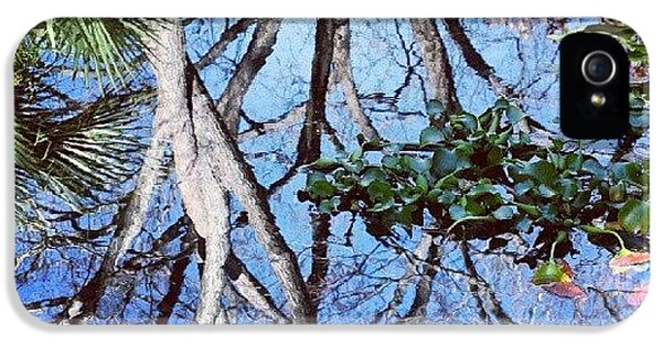 Cool iPhone 5 Case - #reflection #tree #cool #popularphoto by Mandy Shupp