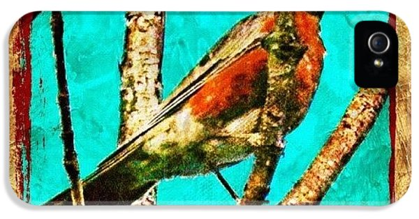 Edit iPhone 5 Case - Robin Perch  by Mari Posa