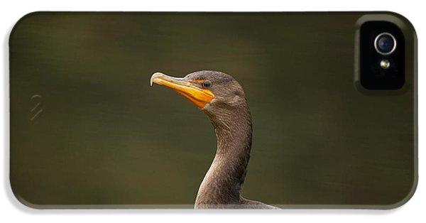 Sea Crow IPhone 5 Case by Karol Livote