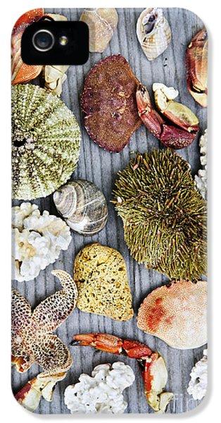 Sea Treasures IPhone 5 Case by Elena Elisseeva