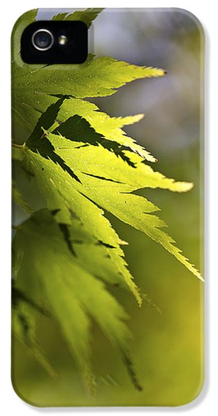 IPhone 5 Case featuring the photograph Shades Of Green And Gold. by Clare Bambers