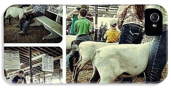 Ohio iPhone 5 Case - Sheep Show by Natasha Marco