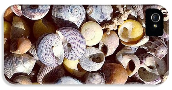 Sunny iPhone 5 Case - Shells From Brittany by Nic Squirrell