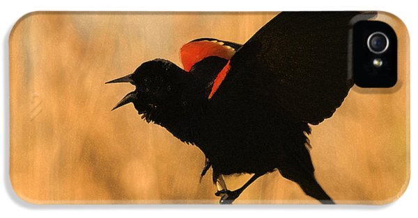 Singing At Sunset IPhone 5 Case by Betty LaRue