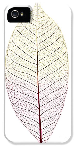 Skeleton Leaf IPhone 5 Case by Elena Elisseeva