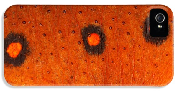Skin Of Eastern Newt IPhone 5 / 5s Case by Ted Kinsman